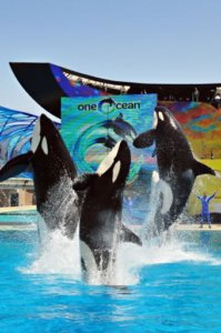 Tips for Visiting SeaWorld San Diego