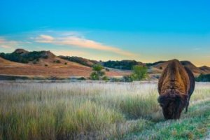 Badlands National Park: Your Guide to Planning a Camping Trip