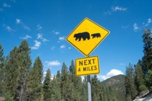 Essential Bear Safety Tips to Keep in Mind When You're Camping